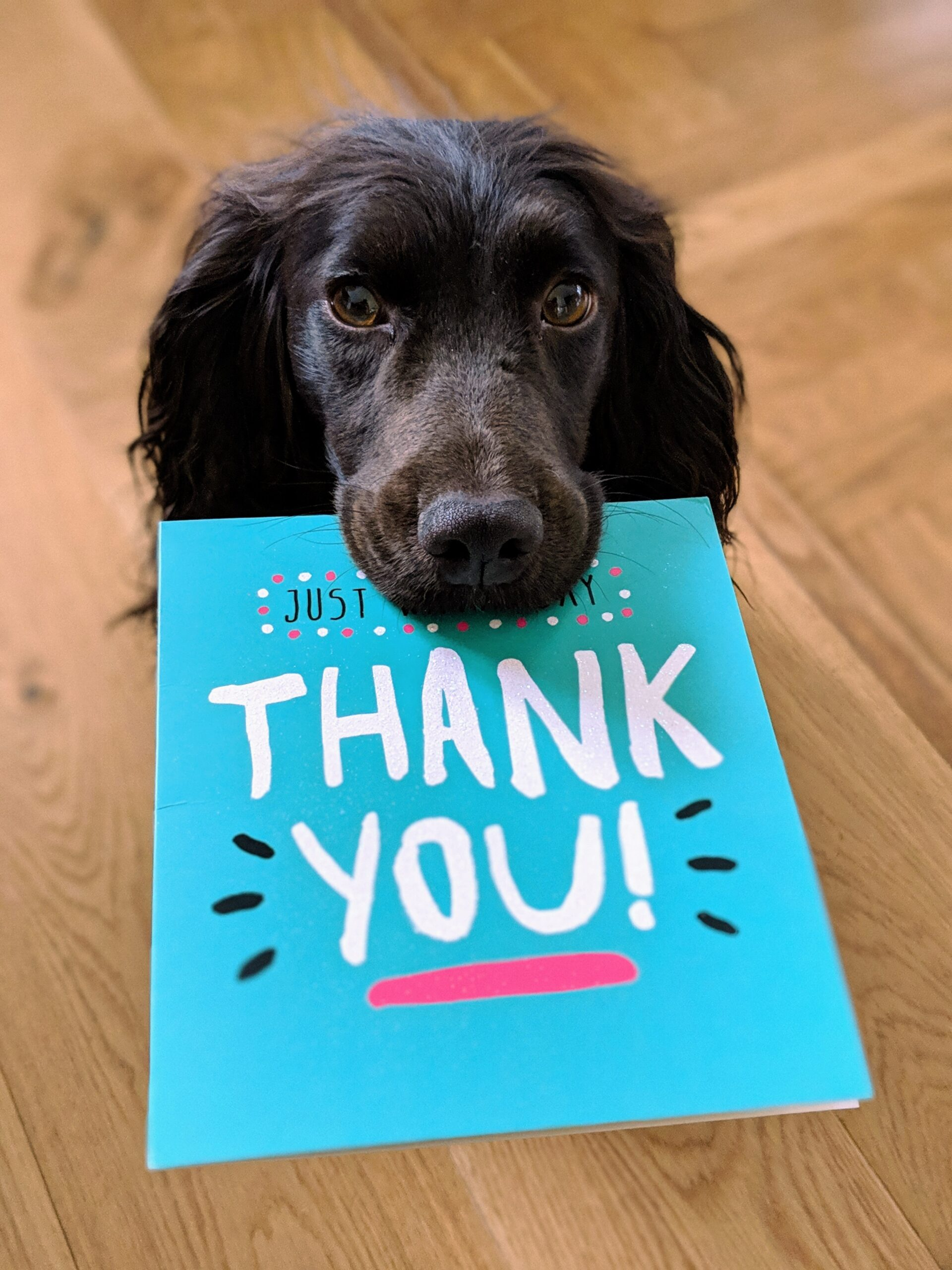 dog with a thank you card